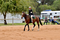 BWB - Pleasure Gelding