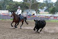 Junior & Juvenile Challenges - Cattle Section