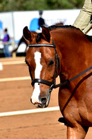 BWB Photography - Henty Winter Dressage Championships - Saturday Only