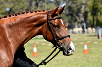 BWB Photography - Capel Adult Rider - Breed Encouragement Show