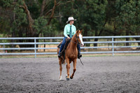 Working Stock Horse Mare