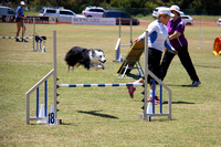 Agility - 11.15am - 1.00pm