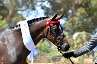 BWB Photography - Pinjarra All Breeds March